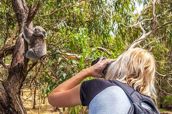 Koalas: the best use of video using movie making software